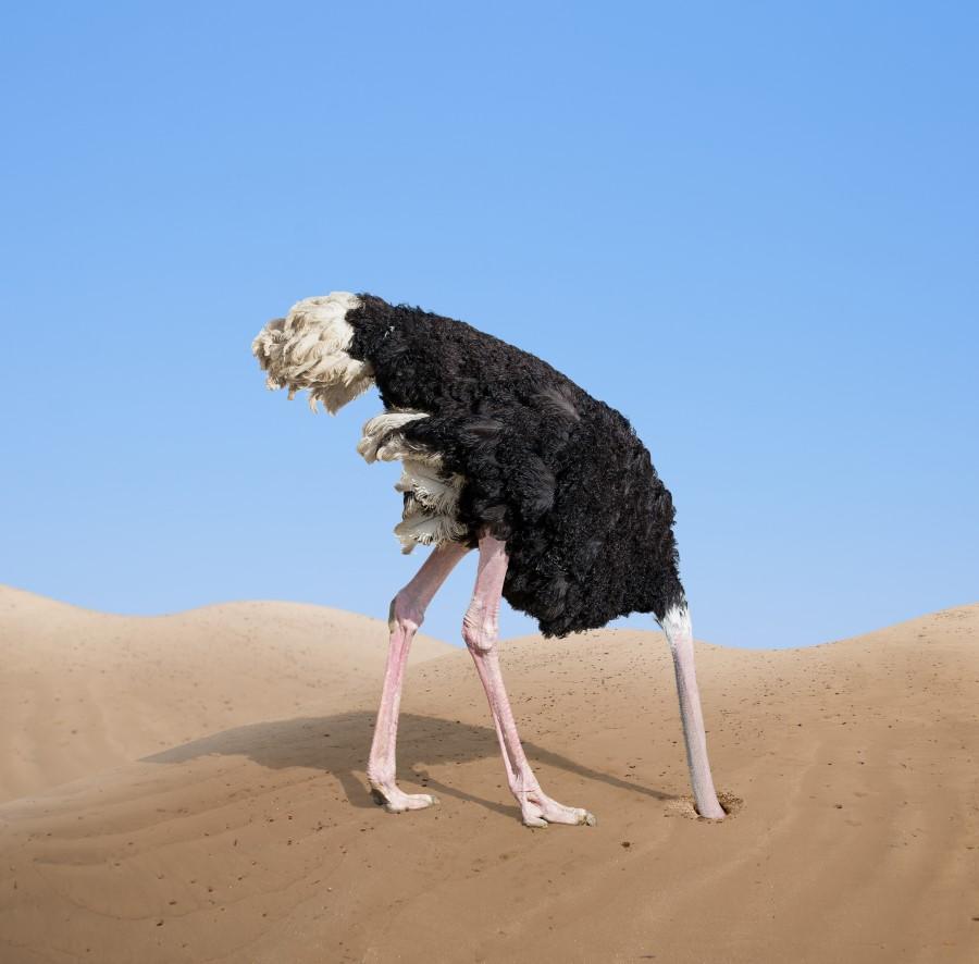 Ostrich-HeadInSand